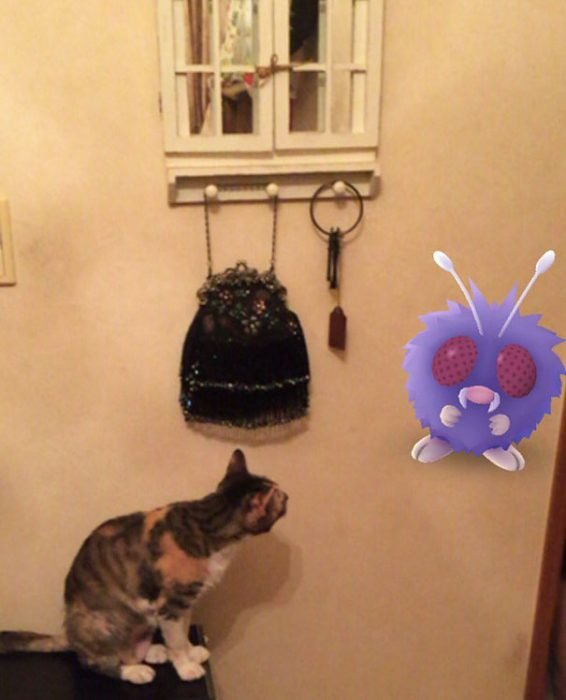 gato pokemon