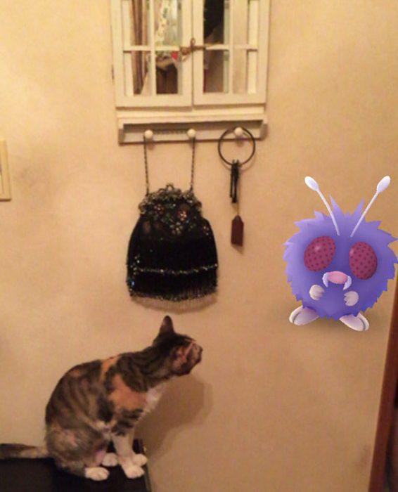 gato pokemon