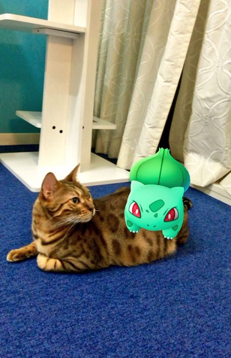 gato viendo pokemon