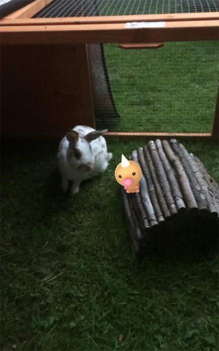conejo pokemon