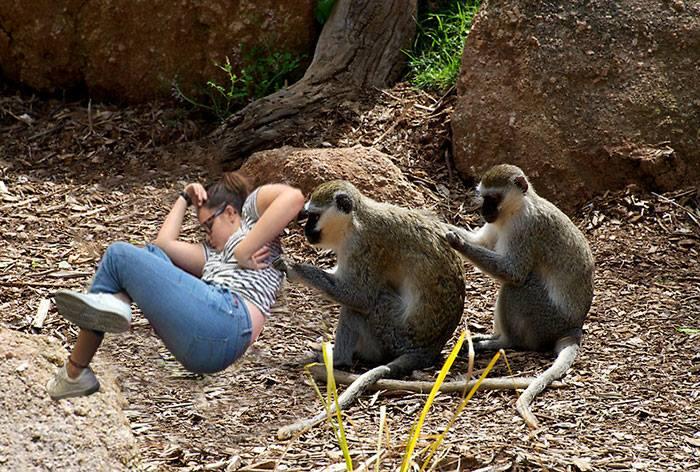 meme chica dormida monos