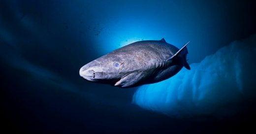 Cover-Tiburon-de-400-años