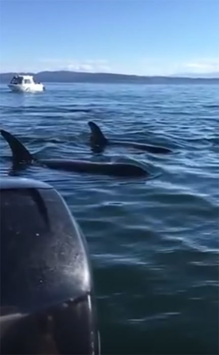 Ballenas cerca de un bote