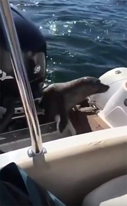 Foca se refugia en un bote