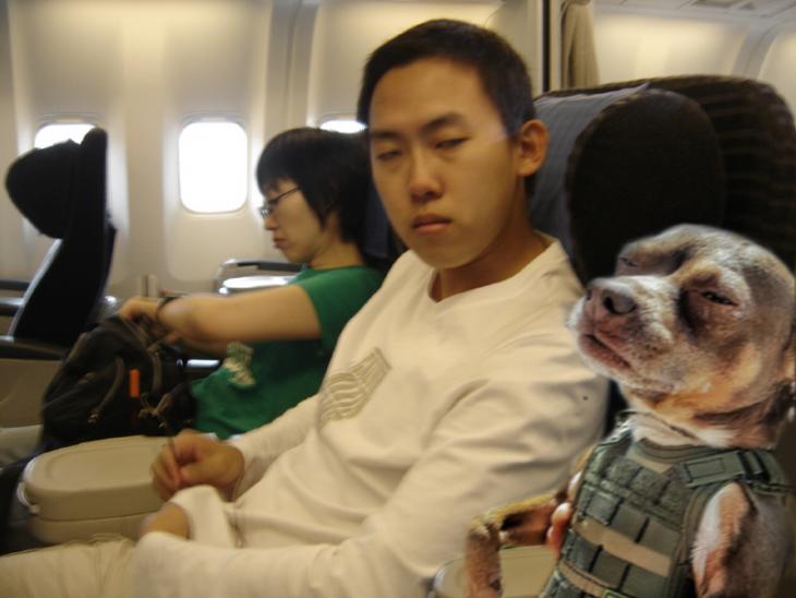 perro con chino