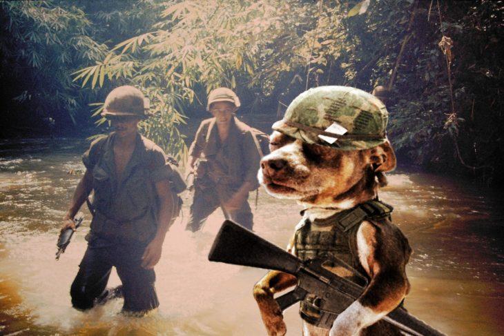vietnam perro