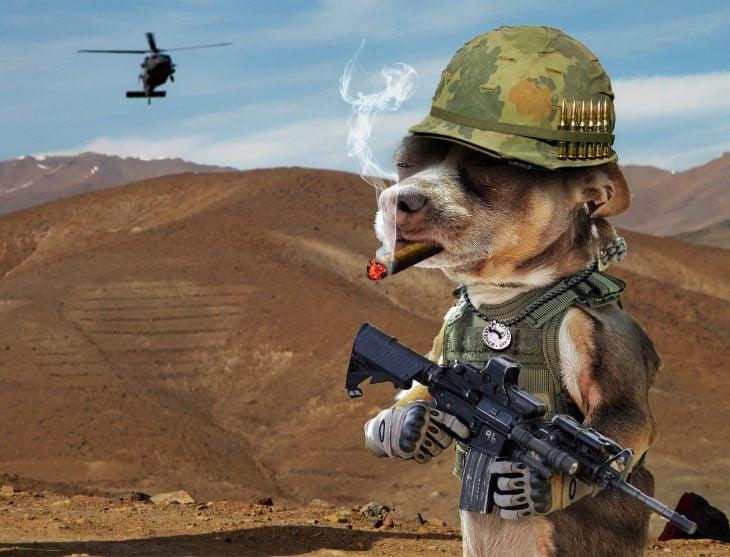 perro helicoptero