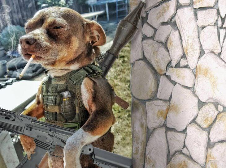 perro armado