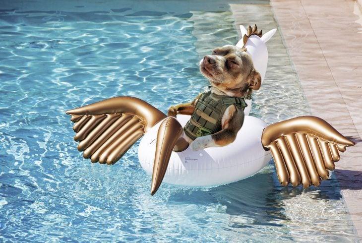 perro en salvavidas