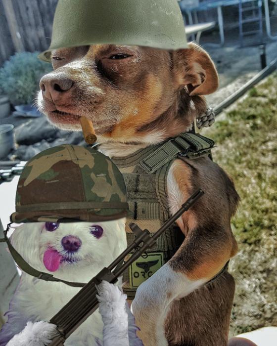 perro y novia
