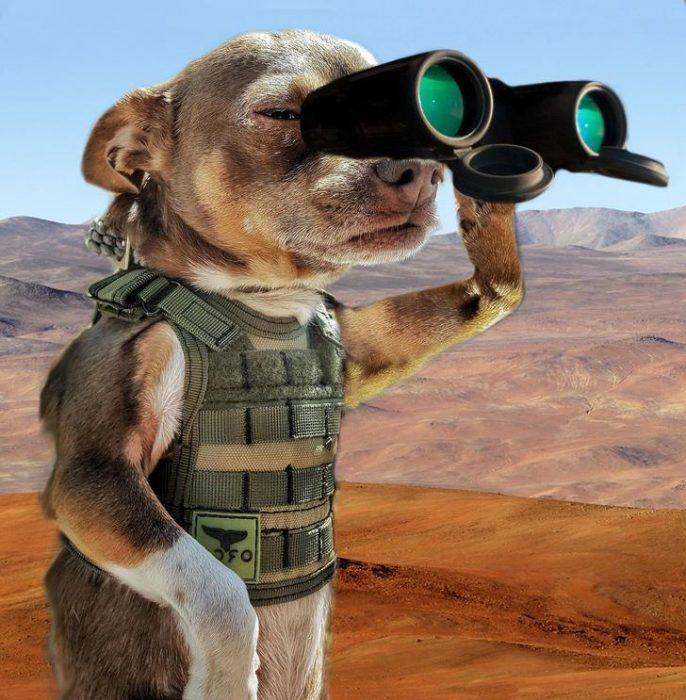 perro vigia