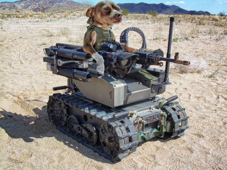 perro tanque