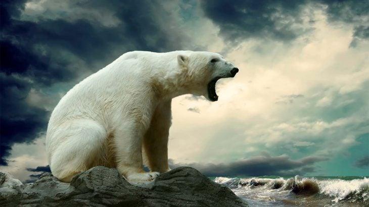 Oso polar rugiendo