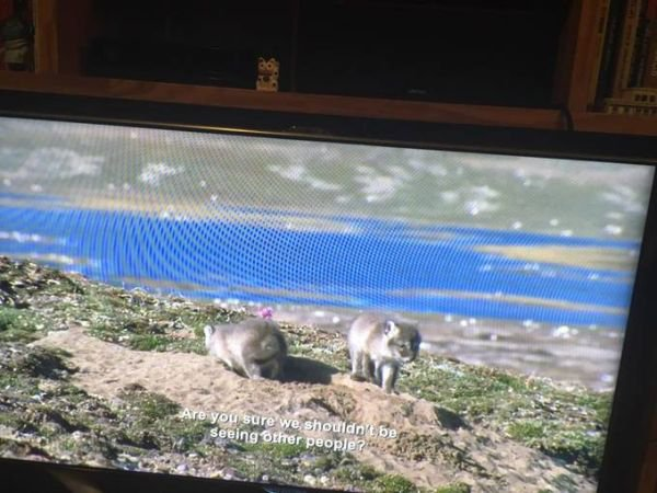 conejos bbc