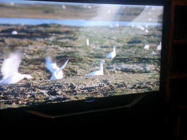 patos en bbc