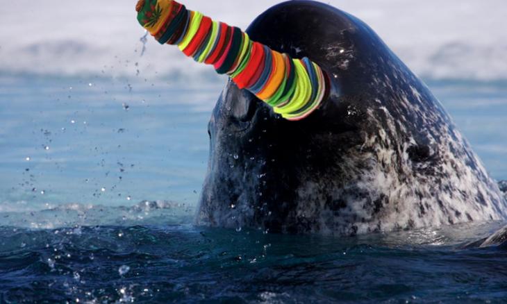 ballena gorros
