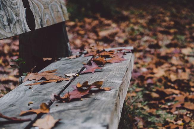 banca hojas