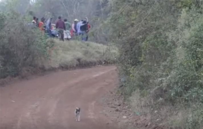 El perro con más suerte en el mundo