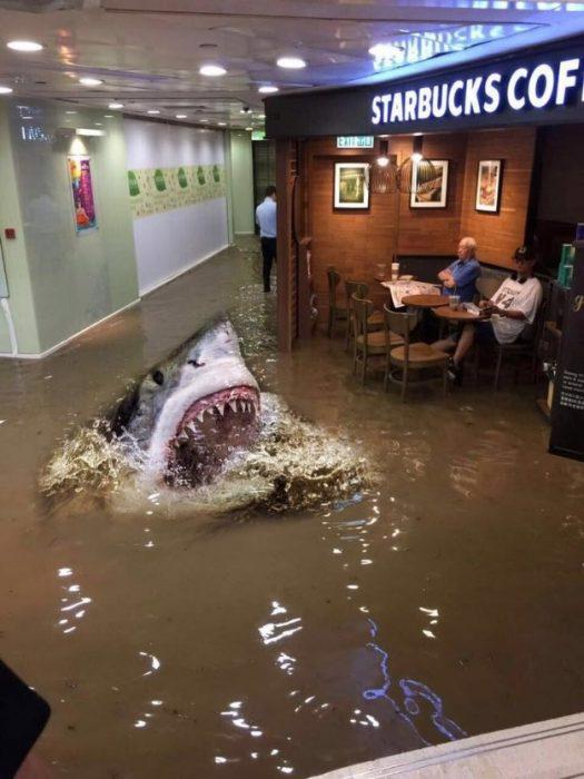 tio starbucks tiburon