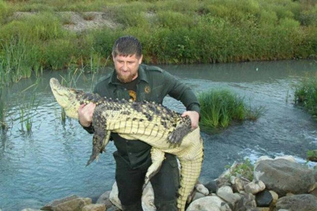 kadyrov cocodrilo
