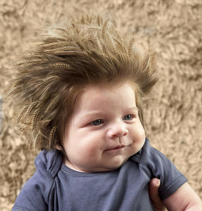 beb trigo