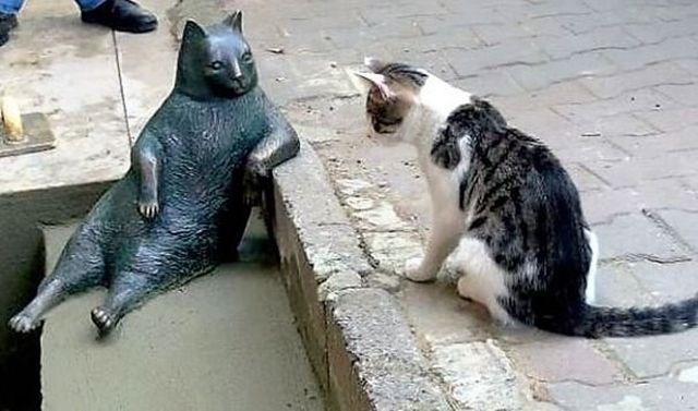 Gato frente a estatua de gato