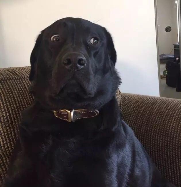 Perro de mirada extraña en Batalla de Photoshop