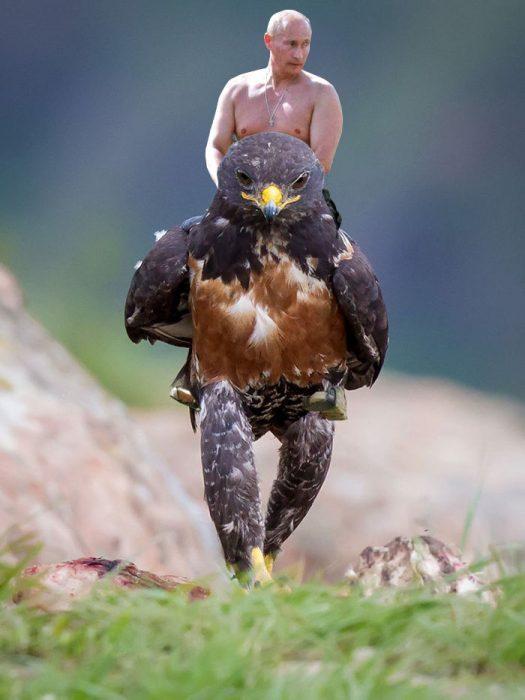 halcon putin