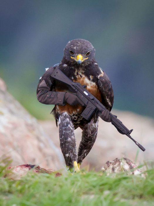 halcon armado