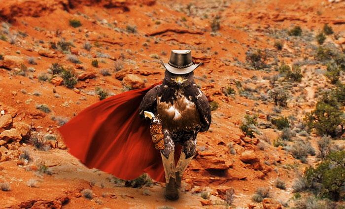 halcon vaquero