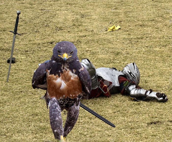 halcon medieval