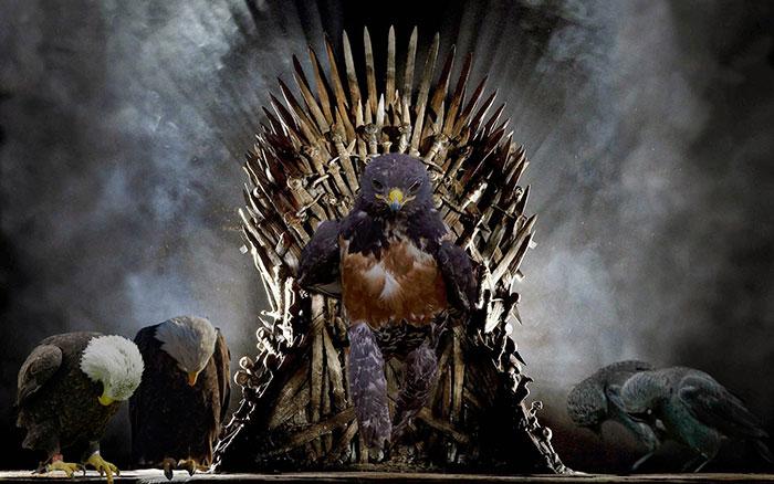 halcon trono