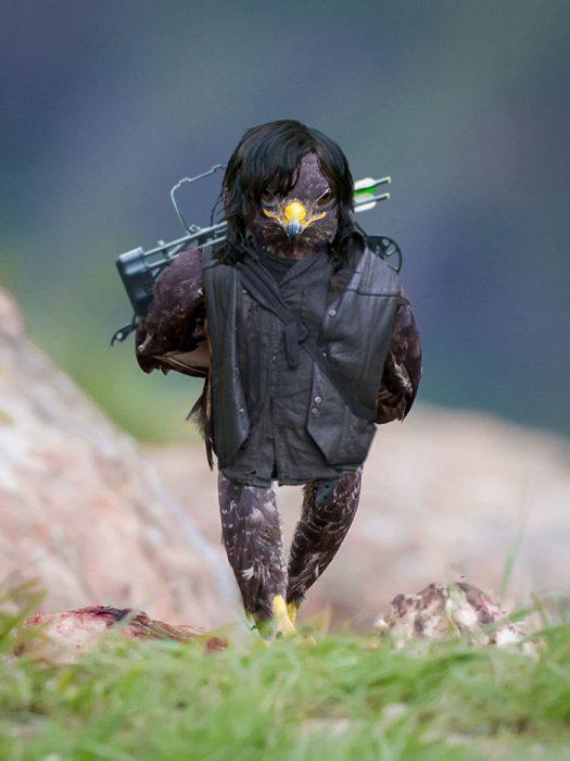halcon rudo