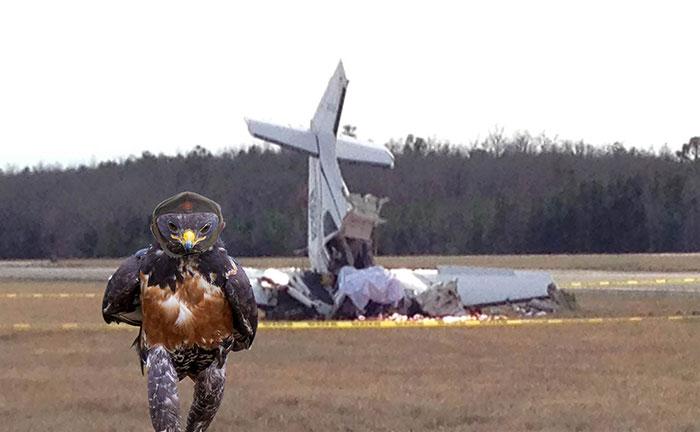 halcon avion caido