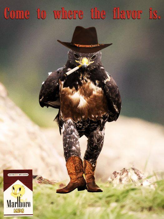 marlboro halcon