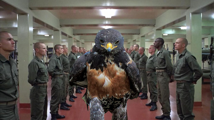 full metal halcon