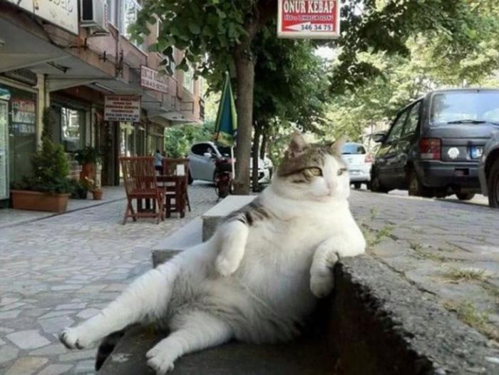 Tombili el gato que tiene una estatua en Turquía
