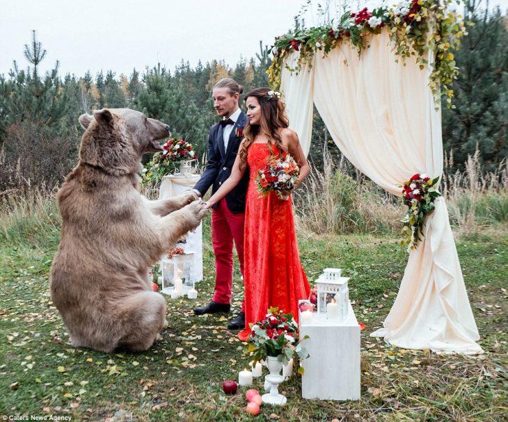 oso grizzly con moño casa a una pareja