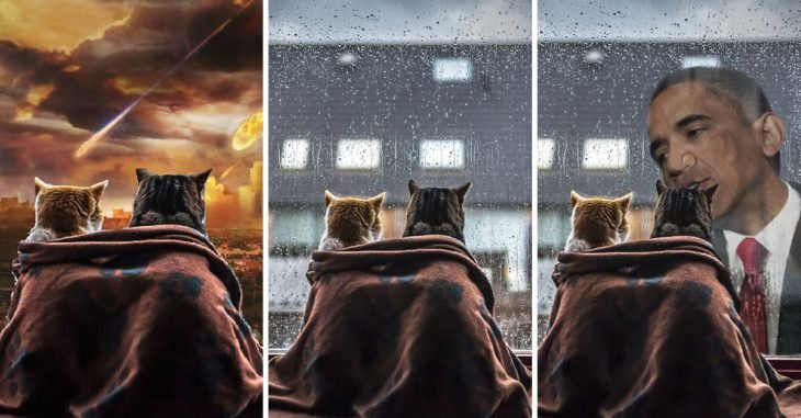 photoshop gatos
