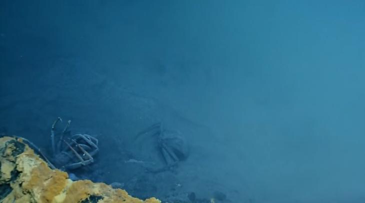 cangrejos lago toxico