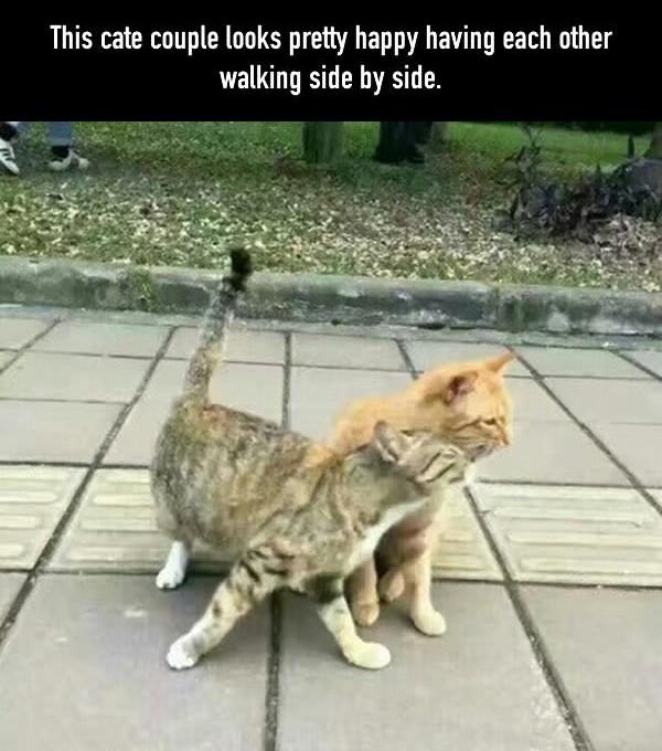 gatos infieles 1