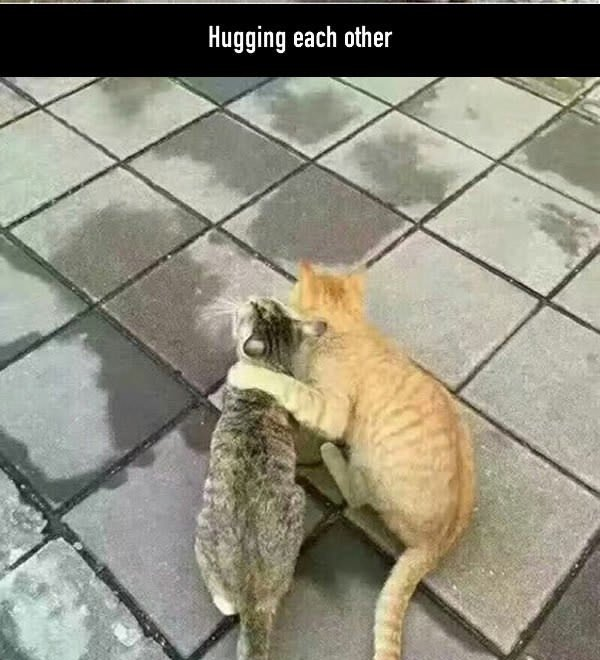 gatos abrazandose