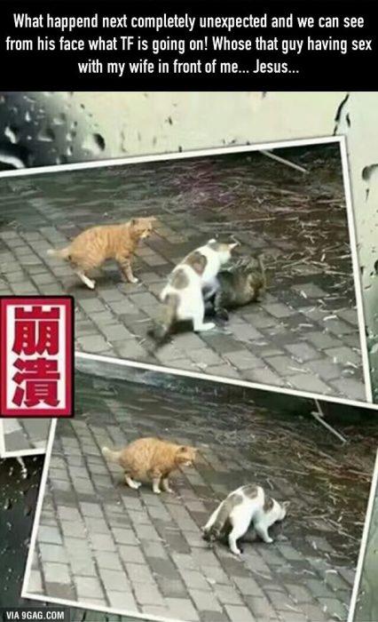 enfrentamiento gatos