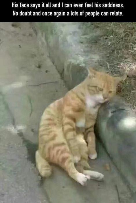 gato chino triste