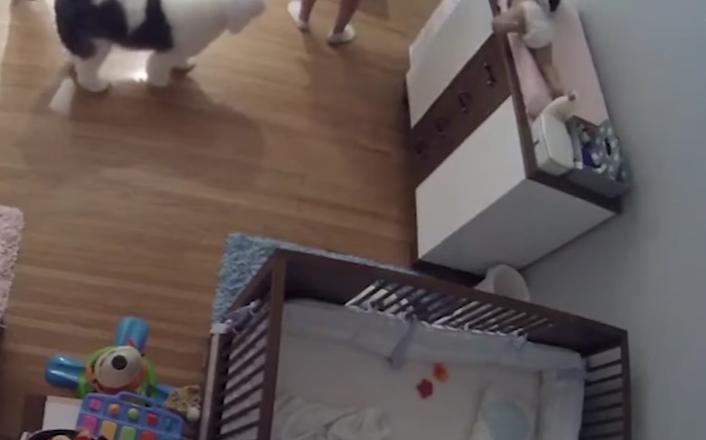 Niño salva de caída a su hermanito
