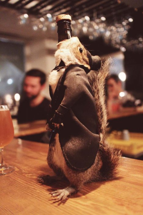 ardilla cerveza