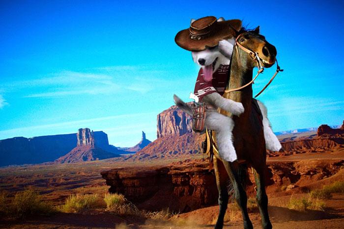 caballo husky PS
