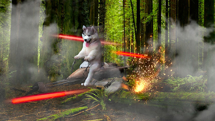 star wars husky PS