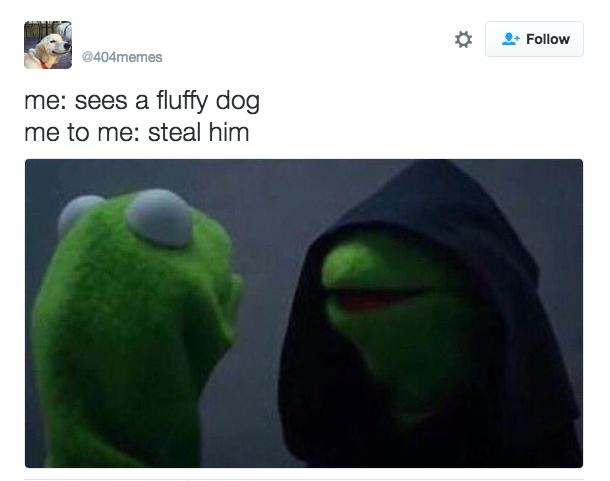 kermit meme perro