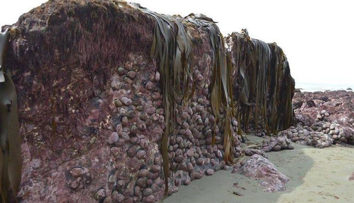 Fondo del mar se eleva luego de terremoto